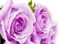 Цены на 8 Марта для женщин: НОЛЬ!